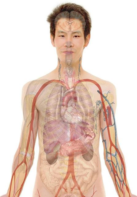 Vyrų anatomijos vaizdas