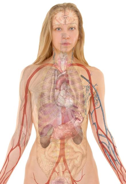 Moters anatomijos vaizdas